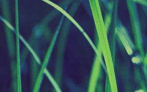 трава, природа, макро, глубина резкости