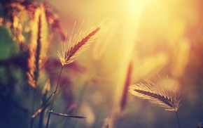 трава, природа, солнечный свет, растения
