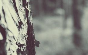 depth of field, monochrome, trees