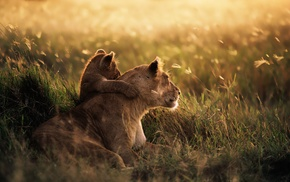 savannah, baby animals, anime, lion, animals