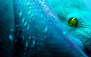 snake, blue