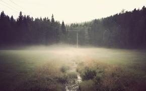 mist, green, landscape