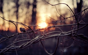 sticks, twigs, depth of field, blurred, sunset, bokeh