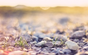 nature, stones, depth of field, sunlight, bokeh