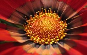 macro, flower, yellow