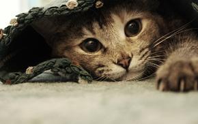 kitten, animals