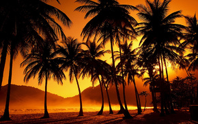 evening, nature, sunset, palm trees, tropics