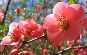 bloom, spring