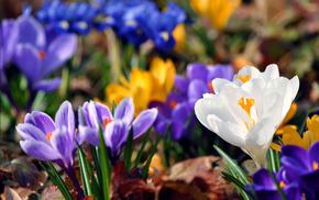 листья, фон, Весна, цвета, яркость, зелень