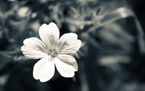 природа, цветы, макро, монохром