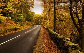nature, road, autumn