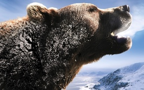 snow, animals, Russia, bear