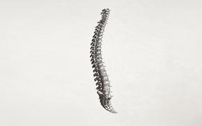 simple background, minimalism, bones, spine, medicine