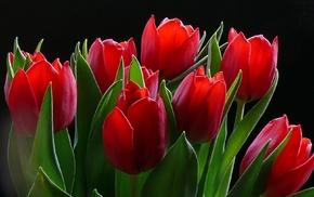 flowers, tulips