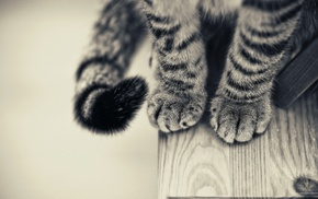 cat, paws, animals, wooden surface, monochrome