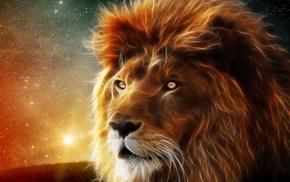 звезды, лев