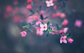 depth of field, flowers, pink flowers
