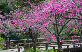 petals, flowers, trees, sakura, spring