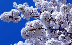 spring, bloom, flowers, branch, sky