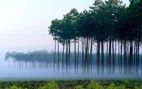 landscape, mist, dawn, trees, nature