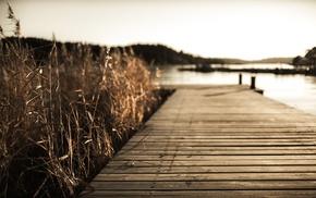 vignette, reeds, pier, nature, landscape
