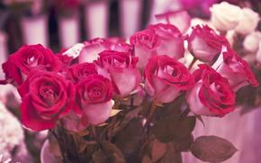 roses, gift, flowers