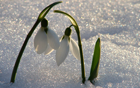 snow, mood, light, flowers