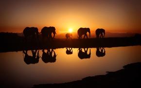 sunlight, nature, futuristic, water, elephants, sky