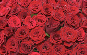 flowers, background, roses, red, bouquet