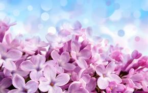 лиловые, фон, Pale red-violet flowers, голубой, красивые, цветы