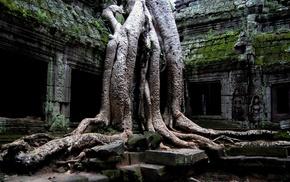 деревья, руины