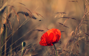 summer, nature, evening, flower, field
