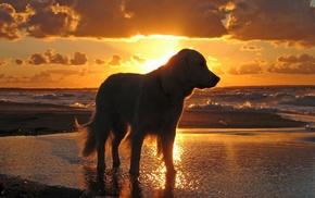Собака, закат, вода, небо, море, животные